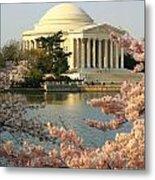 Jefferson Cherry Blossoms Metal Print