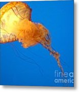 Jelly Belly Metal Print