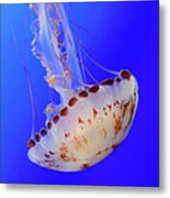 Jellyfish 4 Metal Print
