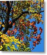 Jewels Of Autumn Metal Print