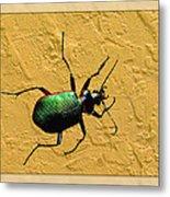 Jeweltone Beetle Metal Print