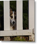 Johnny And The Picket Fence Metal Print