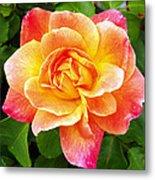 Joseph's Coat Rose Metal Print