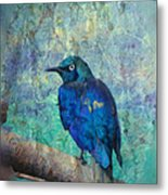 Josh's Blue Bird Metal Print