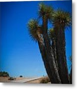 Joshua Tree 4 Metal Print