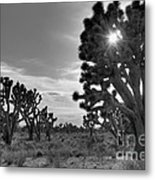 Joshua Tree National Preserve Metal Print