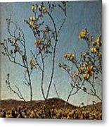 Joshua Tree Park In Bloom Metal Print