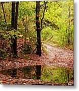 Josie's Brook Trail Metal Print