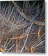 Journey Inward Metal Print