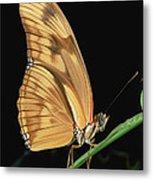 Julia Butterfly Dryas Iulia Portrait Metal Print
