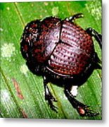 Jungle Beetle Metal Print