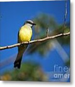 Jungle Flycatcher Metal Print