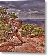 Junipers Storm Metal Print by John Kelly