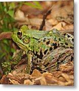 Just A Frog Metal Print