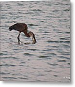 Just A Little Snack Metal Print