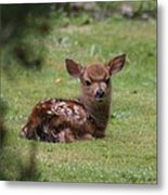 Just Born Bambi Metal Print