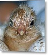 Just Hatched Metal Print