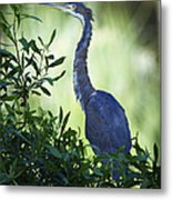 Just Out Of The Water Metal Print