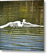 Just Soar  Metal Print