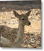 Juvenile Deer Metal Print