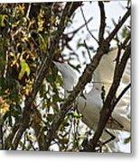 Juvenile Snowy Egret Metal Print