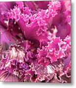 Kale Plant With Melting Snow Metal Print