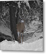 Keeping Guard Metal Print
