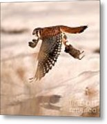 Kestral In Flight Metal Print