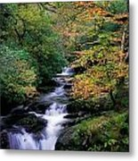 Killarney National Park, Ring Of Kerry Metal Print