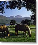 Killarney,co Kerry,irelandtwo Horses Metal Print