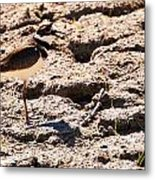Killdeer Pitching A Fit Metal Print