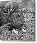 King Hare Metal Print
