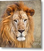 King Of Beasts Portrait Of A Lion Metal Print