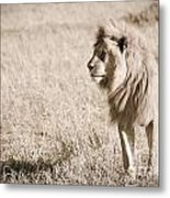 King Of Cats In Sepia Metal Print