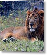 King Of Zoo Metal Print