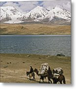 Kirghiz Nomad Leads Bactrian Camels Metal Print