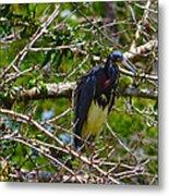 Kissimmee Bird 2 Metal Print