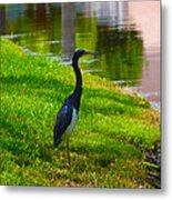 Kissimmee Pond Bird Metal Print