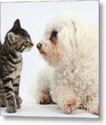 Kitten & Pup Confrontation Metal Print