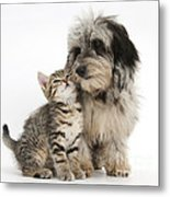 Kitten And Daxie-doodle Puppy Metal Print