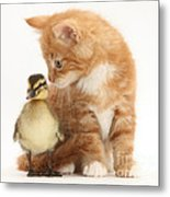 Kitten And Duckling Metal Print