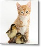 Kitten And Ducklings Metal Print