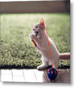 Kitten Catches Feather Toy Metal Print