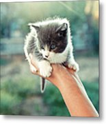 Kitten In Hand, 2010 Metal Print