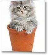 Kitten In Pot Metal Print