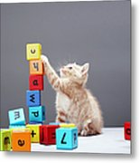 Kitten Playing With Building Blocks Metal Print