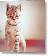 Kitten Walking On Floor Metal Print by Alberto Cassani