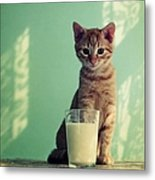 Kitten With Glass Of Milk Metal Print