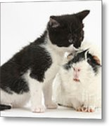 Kitten With Guinea Pig Metal Print