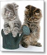 Kittens And Watering Can Metal Print
